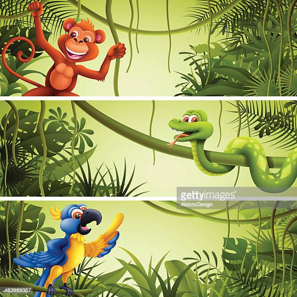 jungle banners with wild animals - monkey stock illustrations