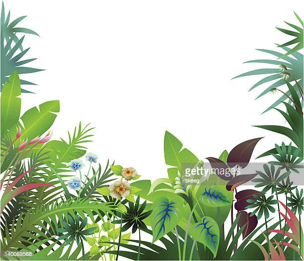 jungle border - tropical bush stock illustrations