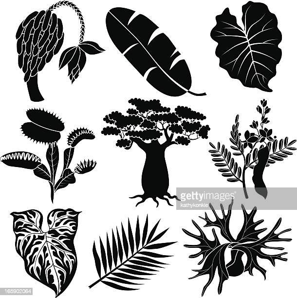 jungle flowers and plants - venus flytrap stock illustrations, clip art, cartoons, & icons