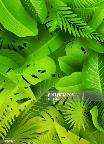 stockillustraties, clipart, cartoons en iconen met jungle groene achtergrond - weelderige plantengroei