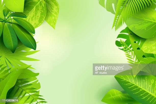 stockillustraties, clipart, cartoons en iconen met jungle groene achtergrond - natuur