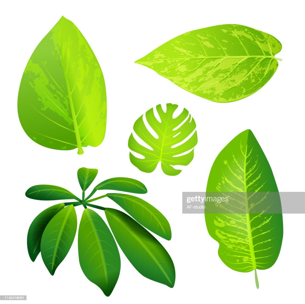 Jungle green leafs- collection. : stock vector