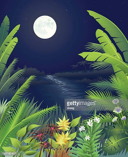 ジャングルの夜