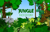jungle rainforest background. Vector illustration