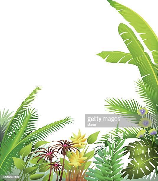 jungle scene border - costa rica stock illustrations, clip art, cartoons, & icons