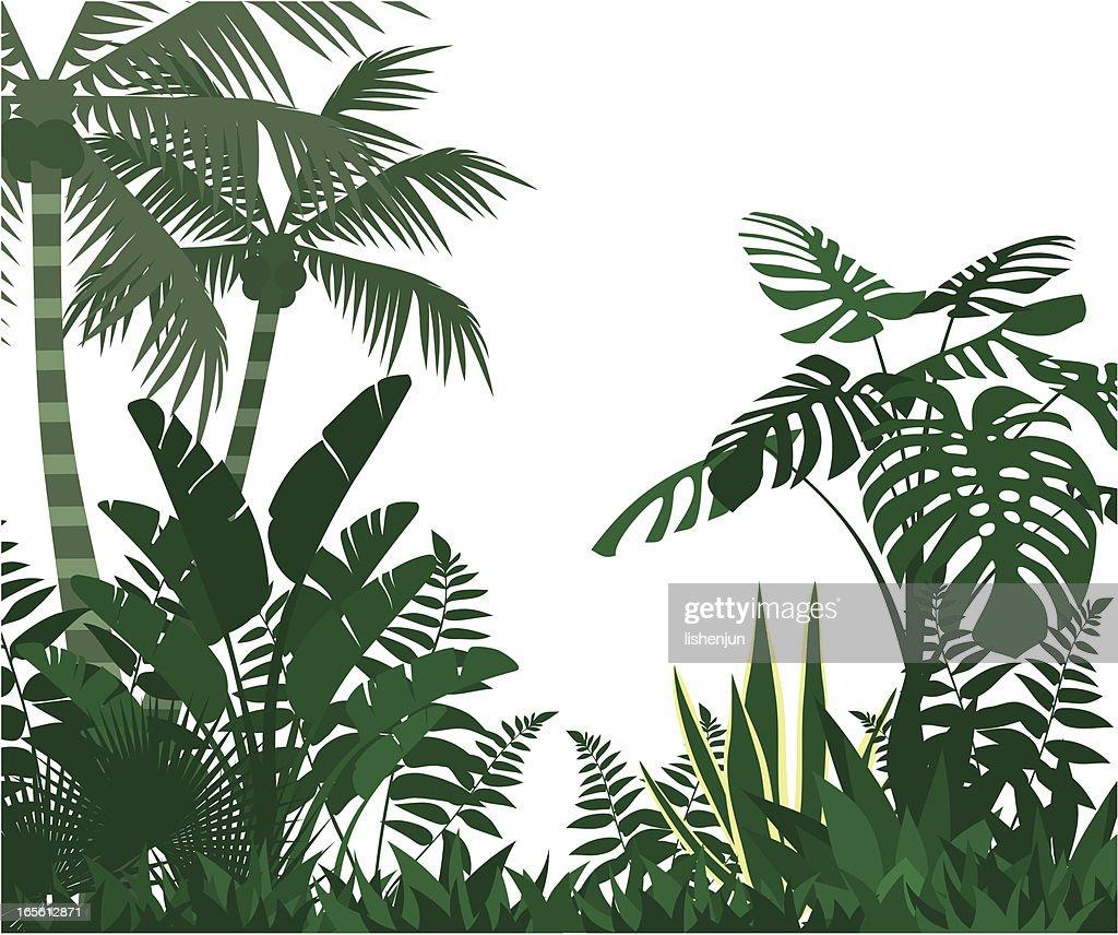 jungle : stock illustration