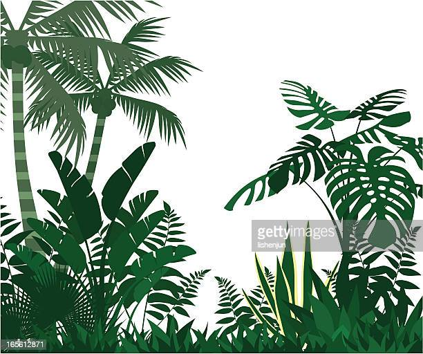illustrations, cliparts, dessins animés et icônes de jungle - jungle