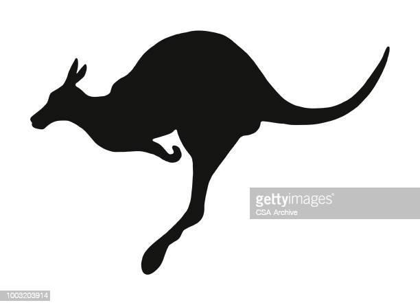 kangaroo - kangaroo stock illustrations