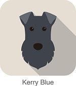 kerry blue terrier dog face portrait flat icon, vector illustration