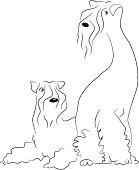 Kerry blue terriers