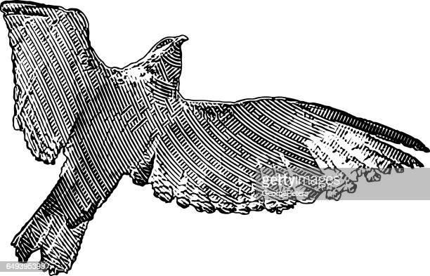 falken fliegen - federzeichnung stock-grafiken, -clipart, -cartoons und -symbole