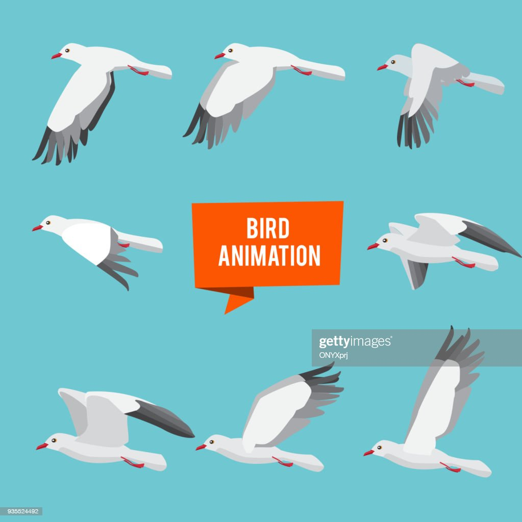 Key frames of animation flying bird