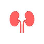 Kidney Vector Illustration isolated on white background