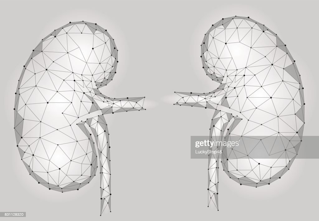 Kidneys internal organ men 3d low poly geometric model. Urology system medicine treatment. Future science technology polygonal geometric gray white vector illustration