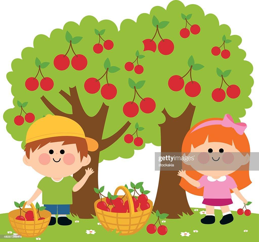 Kids harvesting cherries