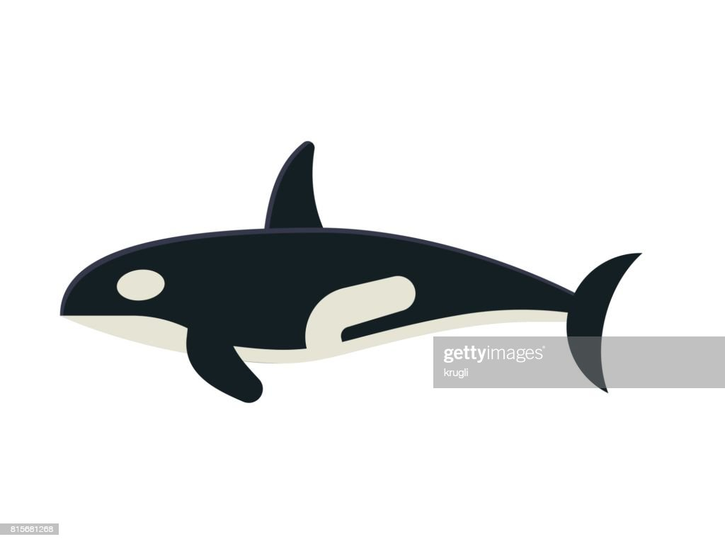 Killer Orca Whale Vector Illustration
