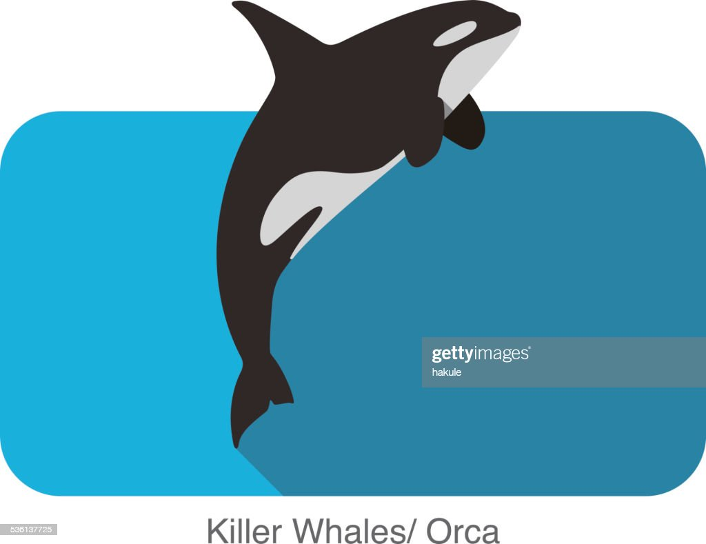Killer Whale jumping in the sea flat icon design : stock illustration