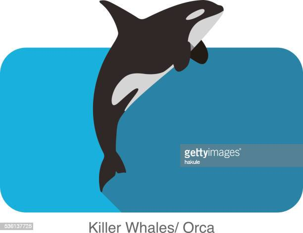killer whale jumping in the sea flat icon design - killer whale stock illustrations, clip art, cartoons, & icons