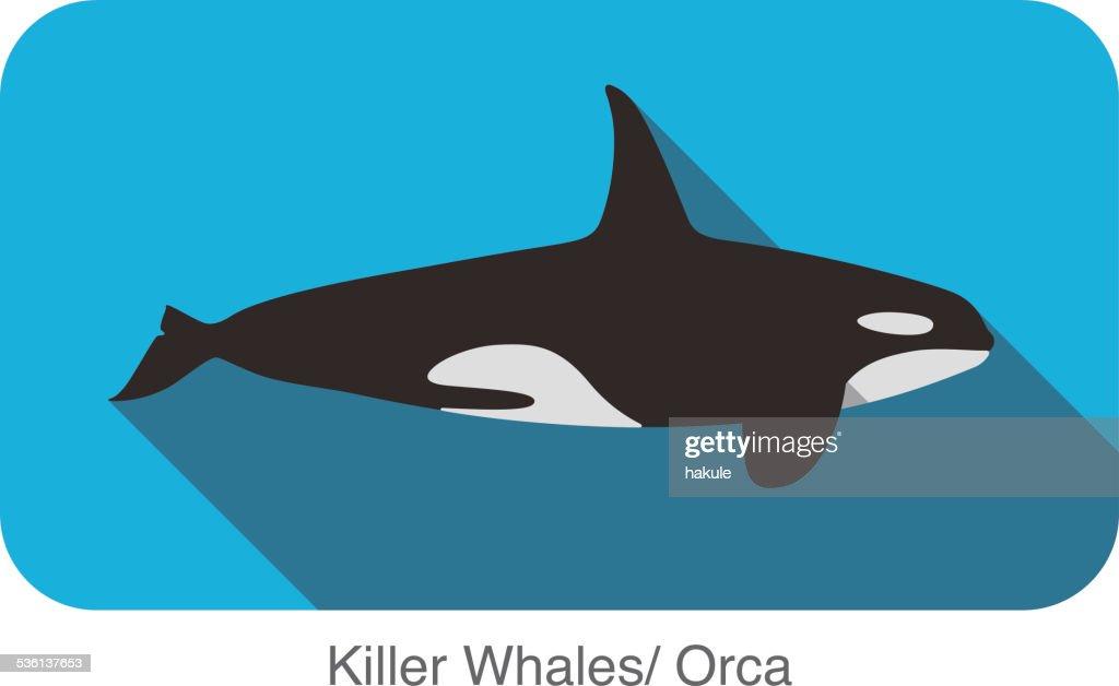 Killer Whale swimming in the sea flat icon design