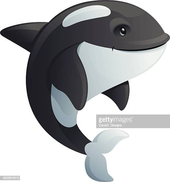 killer whale - killer whale stock illustrations, clip art, cartoons, & icons