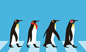King Penguin walking, Penguin seed series