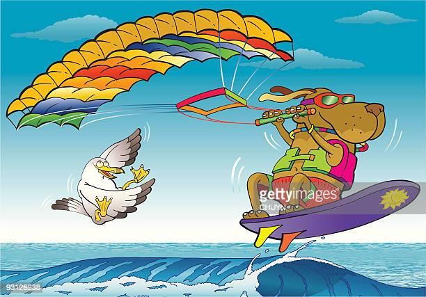 illustrations, cliparts, dessins animés et icônes de kite surf chien - chien humour