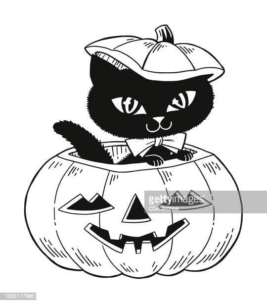 kitten in a jack o lantern - pumpkin cats stock illustrations