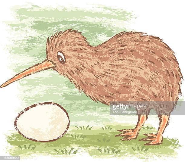 ilustraciones, imágenes clip art, dibujos animados e iconos de stock de kiwi pájaro y huevo - animal egg