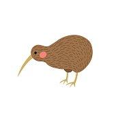 Kiwi bird animal cartoon character vector illustration.