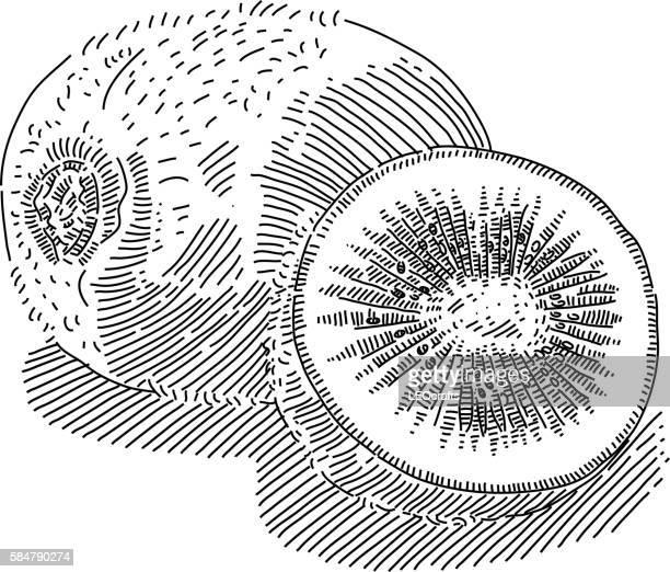 Kiwi Fruit Drawing