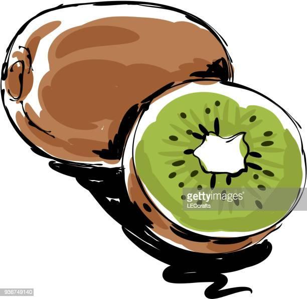 ilustrações de stock, clip art, desenhos animados e ícones de kiwi fruit drawing - fruta kiwi