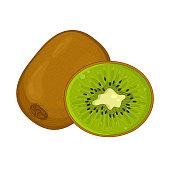 Kiwi fruit isolated and half cut kiwi fruit. Vector illustration.