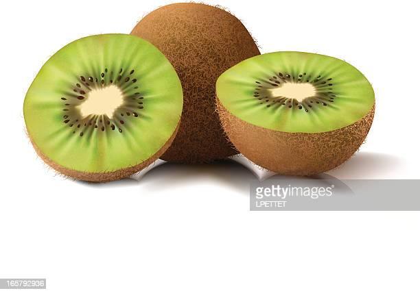 kiwi - vector illustration - kiwi fruit stock illustrations
