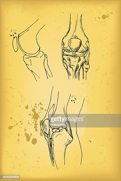 knee joint - human knee stock illustrations, clip art, cartoons, & icons