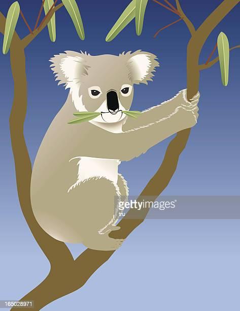 コアラ食べるユーカリ - ユーカリの葉点のイラスト素材/クリップアート素材/マンガ素材/アイコン素材