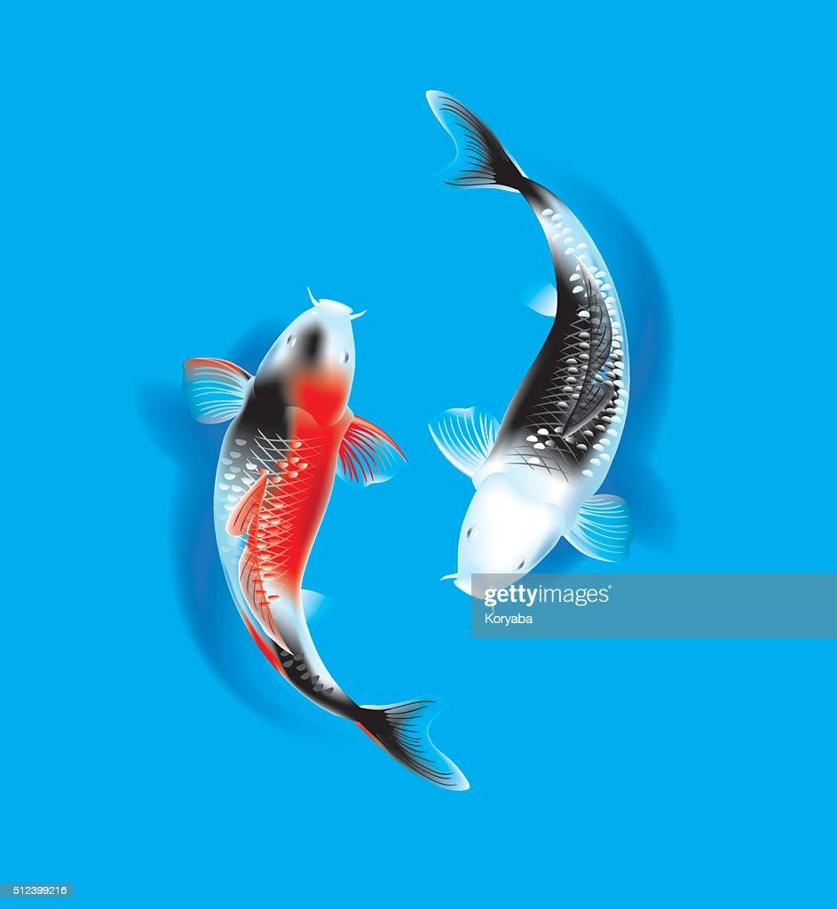 Koi couple on blue
