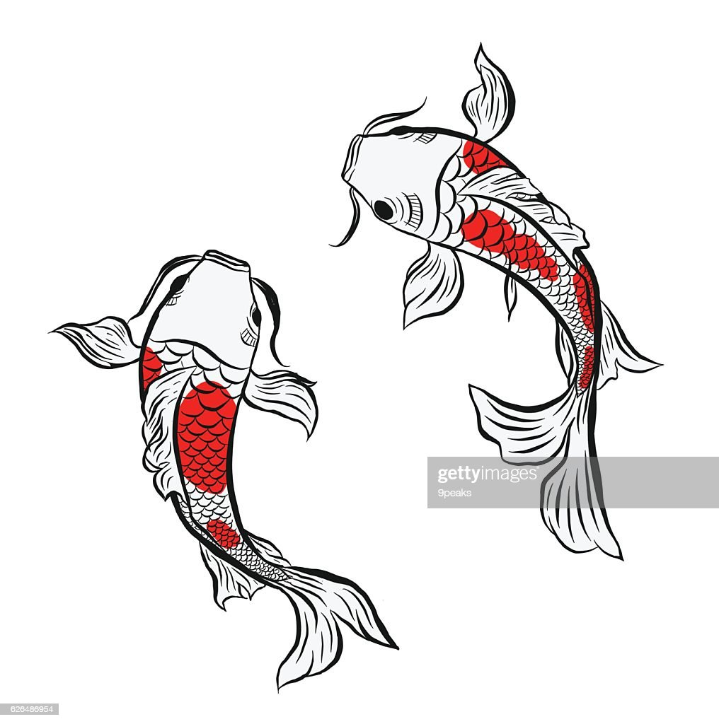 koi fish, illustration
