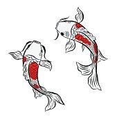 koi fish, illustration