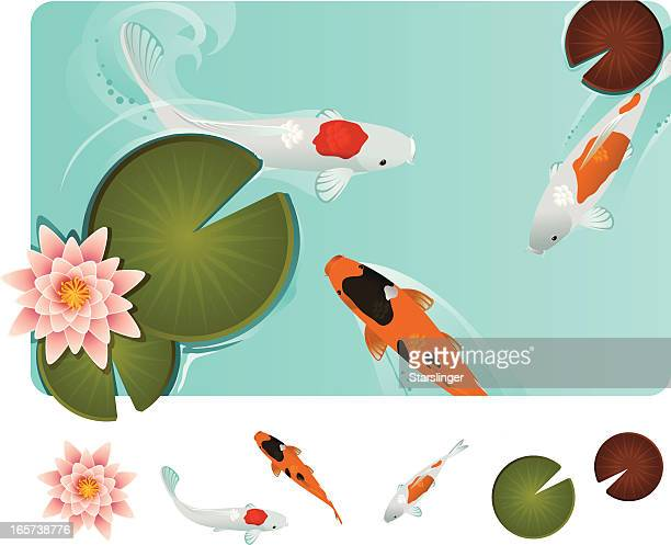 koi fish in blue water with lilly pads - lily stock illustrations, clip art, cartoons, & icons