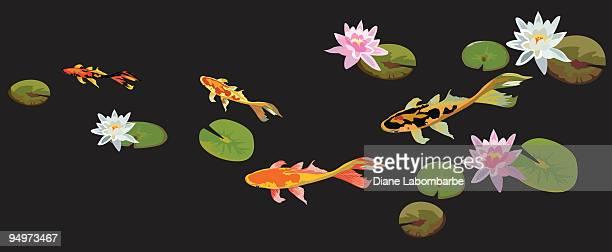 illustrations, cliparts, dessins animés et icônes de bassin peuplé de carpes koï - poisson rouge