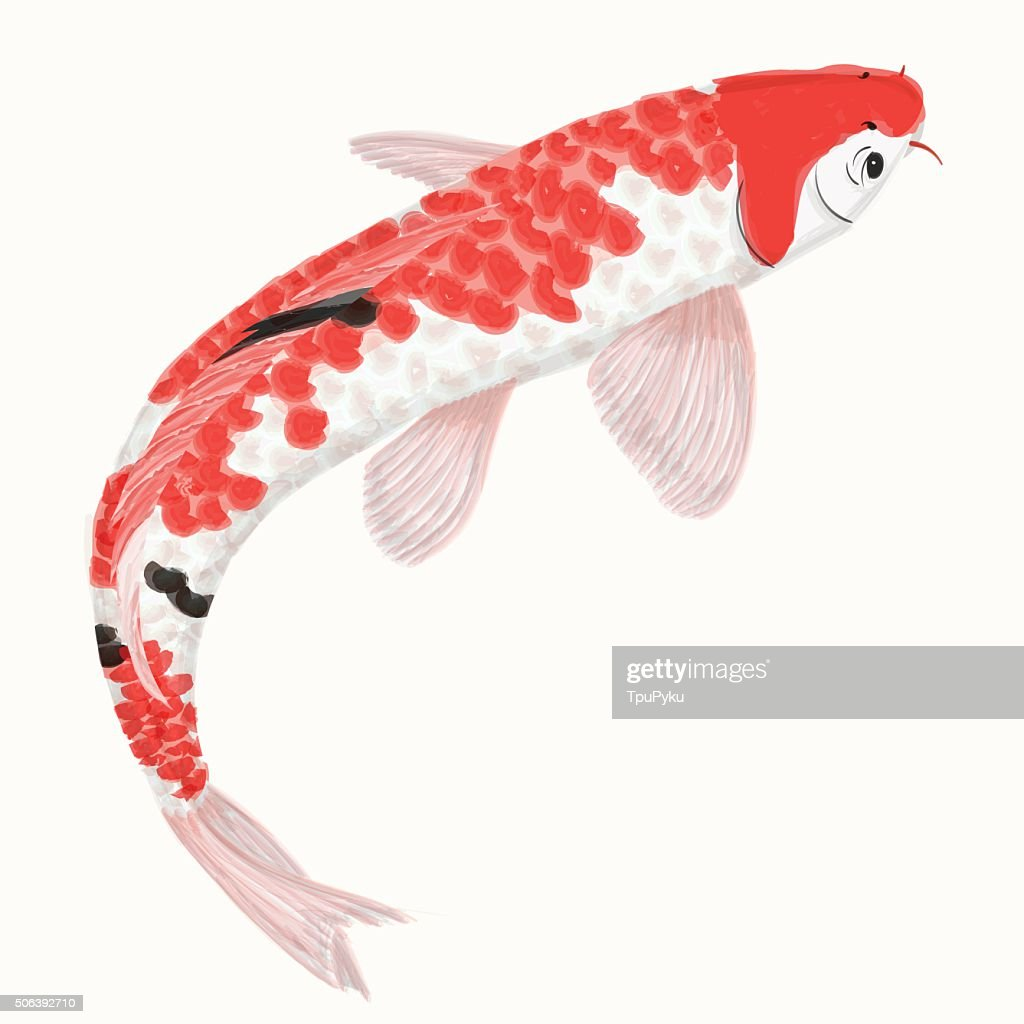 Koi rainbow carp. Hand drawn fish isolated