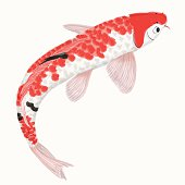 Koi rainbow carp. Hand drawn fish isolated