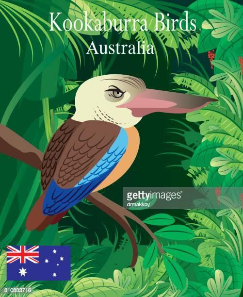 kookaburra birds - uluru stock illustrations