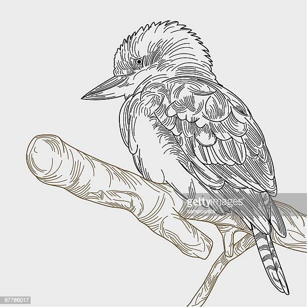 kookaburra on a branch - one animal stock illustrations