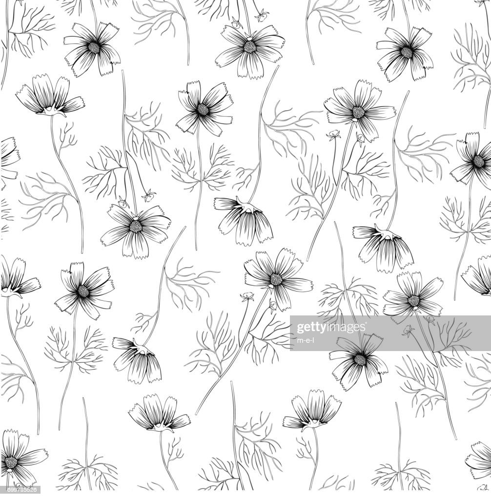 Kosmos flower, kosmeya hand drawn ink sketch, floral vector seamless pattern, graphic illustration, wild flower astra, design for greeting card, wedding invitations, cosmetic packaging, beauty salon