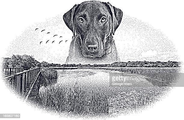 World's Best Labrador Retriever Stock Illustrations ...