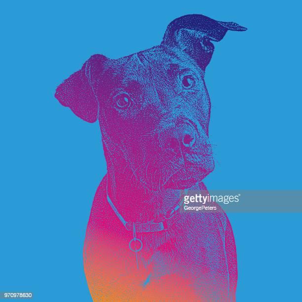 Labrador Retriever dog hoping to be adopted