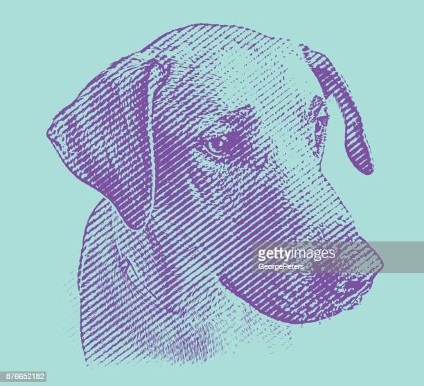 Labrador Retriever Meng hond te wachten om te worden vastgesteld