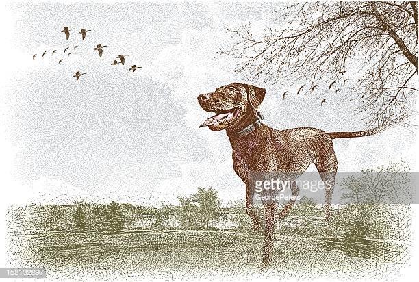 Labrador Retriever Outdoors