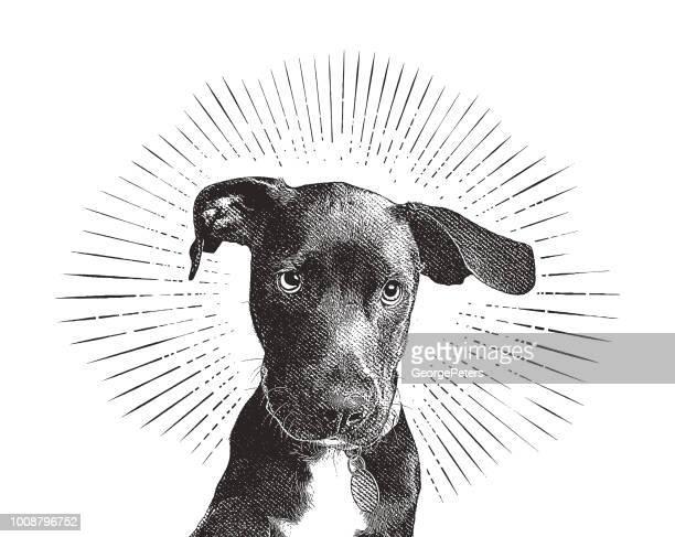 ilustrações, clipart, desenhos animados e ícones de labrador retriever cachorrinho em um abrigo de animais na esperança de ser adotada - fragilidade